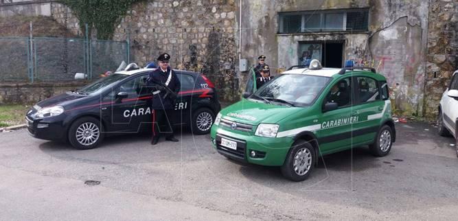 Il blitz dei Carabinieri e della Forestale eseguito nei giorni scorsi