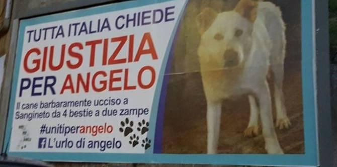 Il cane ucciso a Sangineto