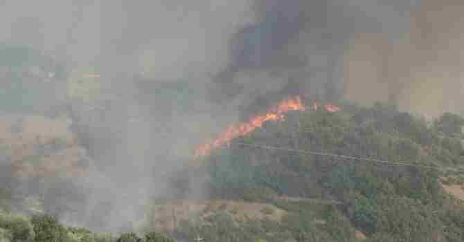 Rose devastata dagli incendi, il sindaco: