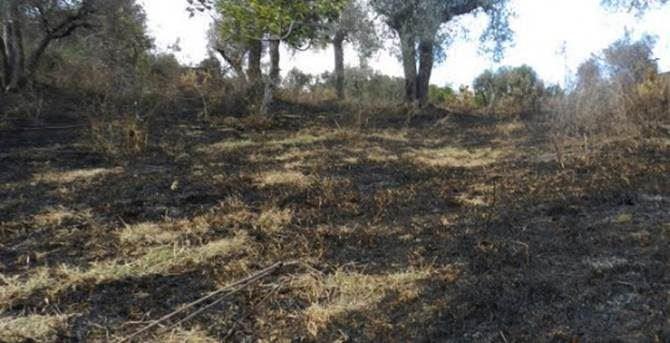 Terreno bruciato