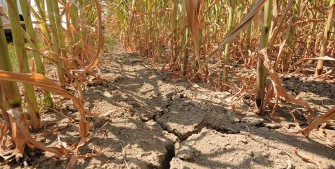 2017 siccita calabria Meteorologicamente pronti e climaticamente intelligenti