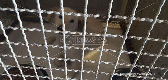 Il cucciolo bianco con le orecchi color caffellatte è al canile comunale