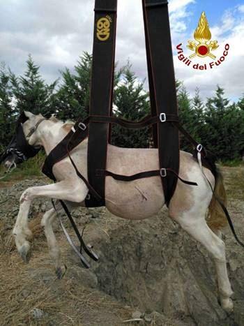 Cutro, salvataggio cavallo