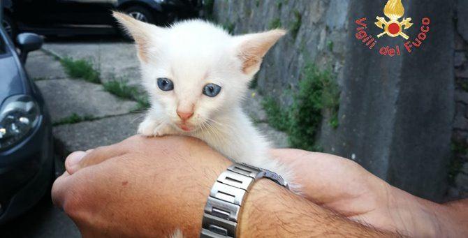 Il gattino salvato