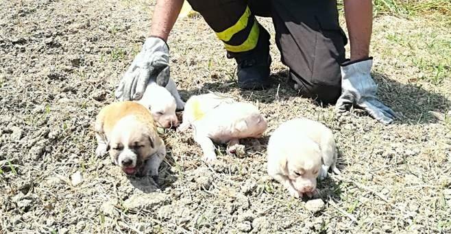 I cuccioli salvati ad Isola Capo Rizzuto