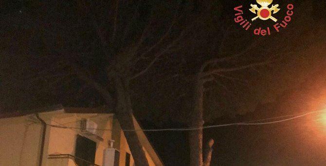 L'albero crollato sul tetto