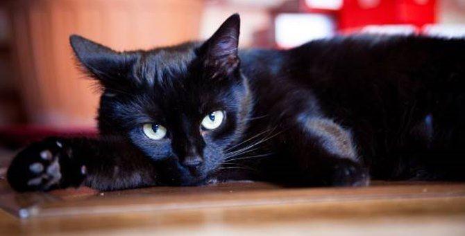 Il gatto nero non fa più paura