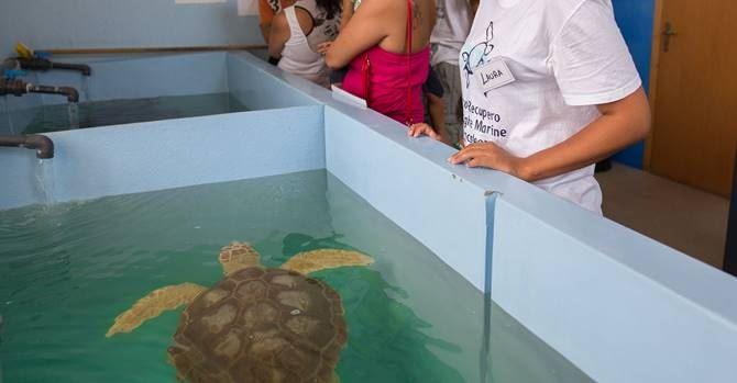Una tartaruga ospite del Centro di Brancaleone