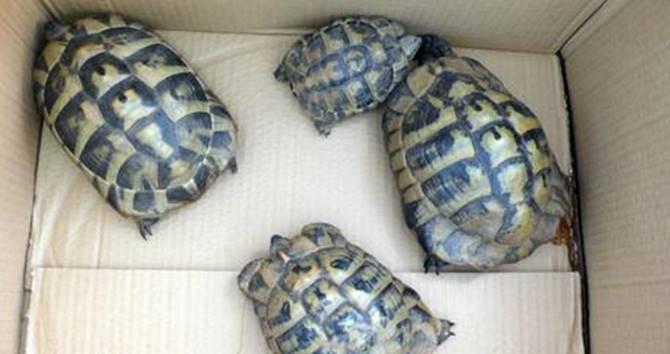 Crotone, alcuni esemplari di tartarughe