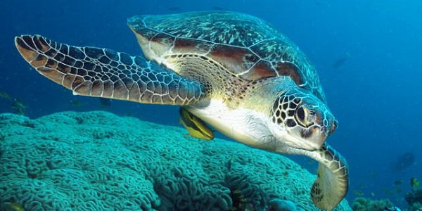 brancaleone patria delle tartarughe di mare
